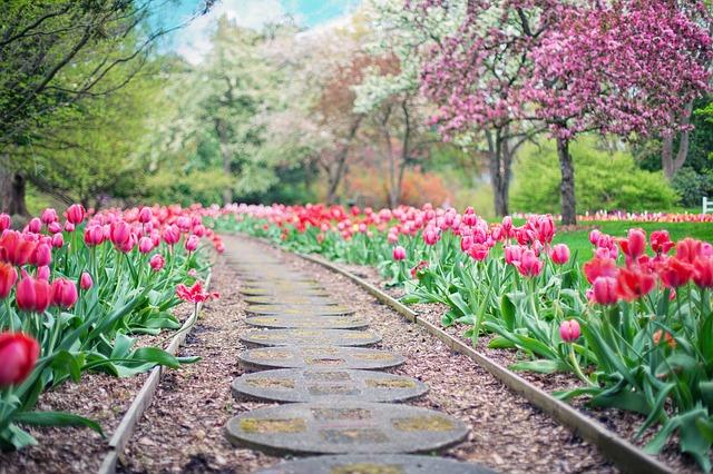 cesta lemovaná tulipány